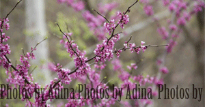 Adina Ogle's Photography